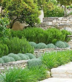 Traditional dry stone wall terracing jardines modernos de town and country gardens moderno Dry Garden, Cottage Garden Plants, Garden Paths, Garden Shrubs, Balcony Garden, Shade Garden, House Plants, Back Gardens, Outdoor Gardens