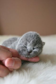 Little baby kitten