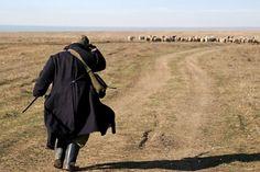 Rumunia pasterz