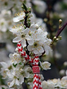 Bulgarian tradition called Baba Marta (Grandma Marta) on 1st of March people start to wear the Martenichka and on 1st of April when in Bulgaria is spring you hang it on a beautiful tree or flower.