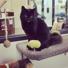 Hey there Deliliah  #kittyplaytime #catsofinstagram #blackcat