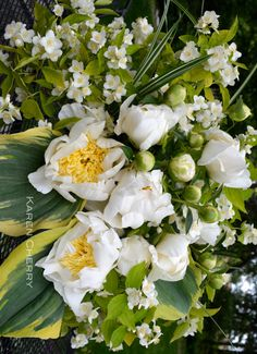 Paeonia 'Cheddar Charm', Philadelphus coronarius 'Aureus', Hosta 'Liberty', Yea... for backyard bouquets!