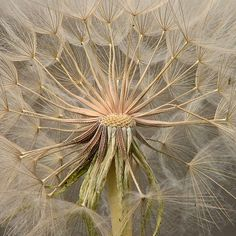 Gone to Seed Already | Flickr - Photo Sharing!