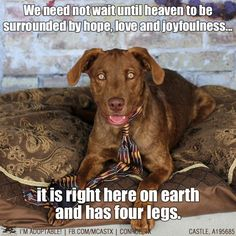 Dogs: little bits of heaven on earth. ADOPTED!!!