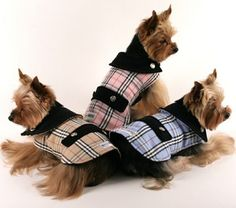Image detail for -spoof on burberry dog coats this is furberry