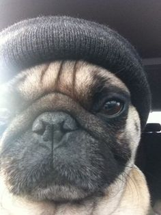 Looks like a meanie in a beanie. @Genna-Paige Kanago: I thought of Mikey as soon as I saw this!