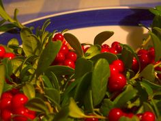 Lingonberry, Vaccinium vitis-idaea makes the forests in Sweden red in autumn. Picked and made jam. Swedish Traditions, Sweden Travel, How To Be Likeable, Forests, Countries, Restaurants, Autumn, Popular, Nature