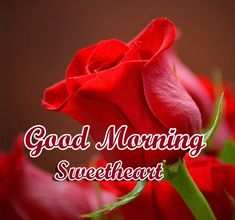 Today We are Share Free Good Morning 4k HD Images Wallpaper , Good Morning 4k HD Images Photo Pics , Flower Nature Good Morning 4k HD Images pictures . Morning Sweetheart, Morning Blessings, Good Morning Messages, Red Roses, Wallpaper, Beautiful, Good Morning Wishes, Wallpapers