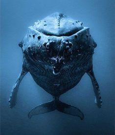 #whale #whales #underwater #ocean #nature #oceanlife #saveocean #sea #wild #discovercocean #diving #scubadiving #whalelover #oceanlover