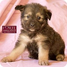 Frosty's Story...  Frosty is one of eight cute puppies looking for a new home. Mom is a Tibetan Terrier mix and dad is a Shiloh Shepherd mix.  Frosty is with Forte Animal Rescue, Marina del Rey, CA     http://www.FARescue.org