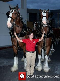 The Budweiser Clydesdales, Hard Rock Hotel, Casino Vegas.....what a lucky girl!!!