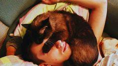 VIZIONEAZĂ VIDEO-ul PENTRU A AFLA de ce pisica adoră să doarmă peste tine și de ce trebuie s-o rabzi: Ten, Cats, Animals, Beautiful, Gatos, Animaux, Animales, Cat, Kitty