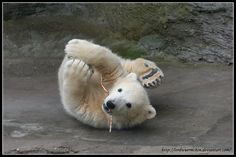 polar bear cub <3