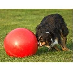 Boomer Ball Indestructible Dog Toy. This is the ultimate dog toy for herder dogs or for dogs who think they can destroy everything - because the Boomer Ball is made from strong solid plastic and cannot be destroyed! Comes in 4 sizes. Available from ActiveDogToys.com