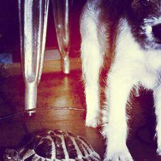 heididahlsveen:  #atsjoo and the #tortoise #dog #pet #puppy #valp #hund