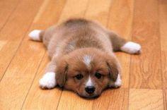 486236_510439235642007_803115652_n.jpg (480×318)犬
