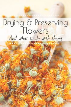 Drying and Preserving Flowers - What to Do With Dried Flowers - Little House Living Real Flowers, Cut Flowers, Wild Flowers, Beautiful Flowers, Exotic Flowers, Purple Flowers, Preserving Pumpkins, Preserving Flowers