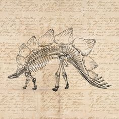 Stegosaurus Art Print Artwork Dinosaur by SparrowHousePrints