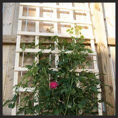 garden ideas Idea Box by Lynne diy garden trellis, diy, gardening, Close up of trellis Rose Trellis, Diy Trellis, Garden Trellis, Trellis Ideas, Diy Garden, Garden Pots, Garden Ideas, Balcony Gardening, Outdoor Projects