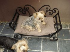 Bed Made From Junk   Doggie Beds Custom Made From Wrought Iron.   Johannesburg   Dogs and ... Doggie Beds, Pet Beds, Dog Bed, Sun Dogs, Pets For Sale, Dog Hacks, Pet Memorials, Metal Crafts, How To Make Bed