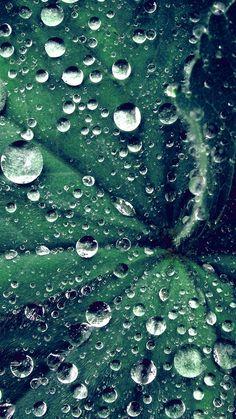 WATER DROP ON LEAF SUMMER GREEN LIVE BLUE WALLPAPER HD IPHONE