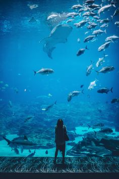 woman standing infront of aquarium with shoal of fish Beautiful, free Up photos from the world for everyone - Infinity Collections Under The Water, Under The Sea, Georgia Aquarium, Fishing Photography, Underwater Photography, Aquarium Pictures, Salt And Water, Fish Tank, Pisces