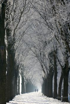 Photo by Lars Van De Goor -- The path of winter, Netherlands Winter Walk, Winter Snow, Winter Holiday, Beautiful World, Beautiful Places, Tree Tunnel, All Nature, Winter Beauty, Winter Scenes
