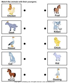 math worksheet : farm animal homes  match farm animals to their homes  classroom  : Animals And Their Babies Worksheets For Kindergarten