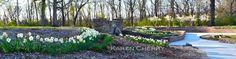 https://flic.kr/p/EqyXDK | Sunken Garden Narcissus 5