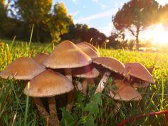 https://flic.kr/p/h2VR5N | Mushrooms | Mushrooms