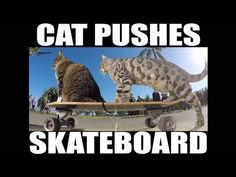 Watch a Cat Push a Skateboard All on His Own - We Love Cats and Kittens