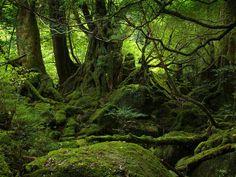 bosques | Paisajes de Bosques y Selvas - Bellos Paisajes de la Naturaleza ...