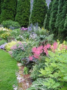 Landscaping with arborvitae on pinterest emerald green for Green plants for flower beds
