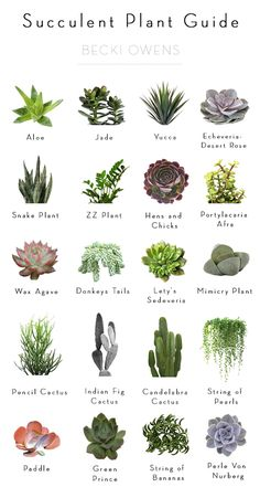 BECKI OWENS- Best of Blog: Indoor Plants- Ideas for styling and my succulent plant guide