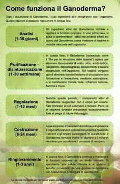 Ecco come agisce il #Ganoderma....maggiori info sul Blog http://ganoderma-salute.com