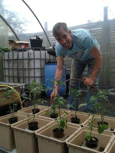 Tomaten gießen
