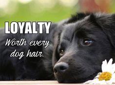 LOYALTY....Worth every dog hair.