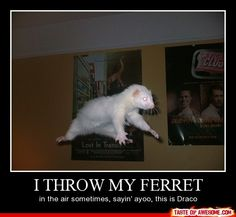"""I threw my ferret in the air sometimes, saying ayo, this is Draco"" that's what it originally said GOD THAT IS FUNNY!!!!!!"