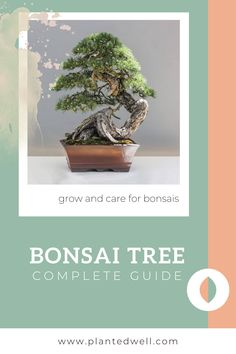 Teaching beginners how to grow Bonsai Tree from seed or through clip and grow from cuttings. Read more about the fastest and easiest to grow bonsais like Juniper bonsais today! Bonsai Ficus, Bonsai Soil, Juniper Bonsai, Bonsai Seeds, Bonsai Apple Tree, Bonsai Tree Types, Landscaping Plants, Garden Plants, How To Grow Bonsai
