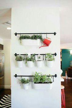 Hierbas de olor para decorar tu cocina