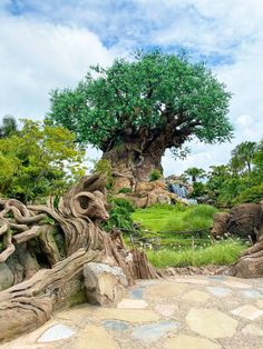 Magic Is Here {Animal Kingdom} – Everything you need to known about returning to the Disney World theme parks Disney World Theme Parks, Disney World Resorts, Disney Vacations, Animal Kingdom Dining, Discovery Island, Authorized Disney Vacation Planner, Disney Shows, Adventures By Disney, Disney Cruise Line