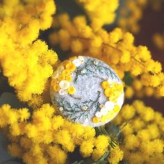 seasons(春に咲く黄色い花 ミモザ)
