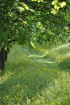 Grassy path through buttercups
