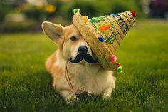 handsomedogs:  ¡Feliz Cinco de Mayo todos!