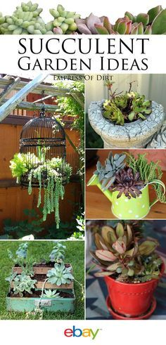 Why succulents? They come in tons of different varieties, colors, textures, and shapes. They are great indoors and out, their shallow roots accommodating a range of containers. You can increase your garden simply from cuttings, they take care of themselves, and with an emphasis on water conservation they are a wise choice! Read on as eBay shares some great succulent garden ideas using items found around your house!