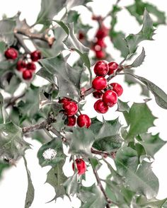 Christmas decor  by Mary Jones on Etsy