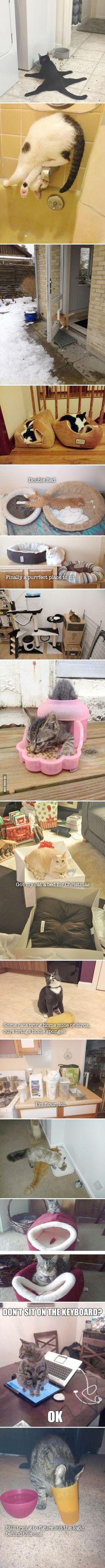 Funny Cat Picture Tumblr #pinterest