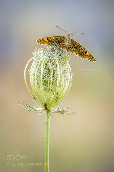 Surprised by javierdb #nature #photooftheday #amazing #picoftheday
