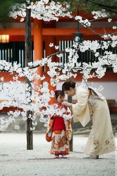 This is exactly what I am hoping to see while in  Japan.  So far the blossoms aren't really in bloom yet. Soon, very soon.