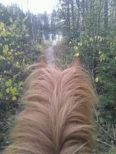 Horse riding adventure in national park, right next to Helsinki (picture taken Oct with Wanton horse) Horse Riding, Helsinki, Wilderness, Remote, National Parks, Explore, Adventure, Pictures, Into The Wild